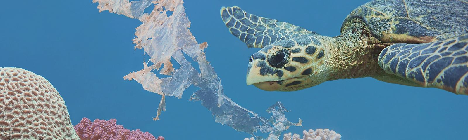 Dyrektywa plastikowa UE – na czym polega