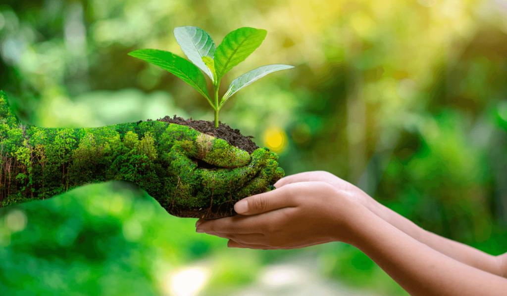 Dzień Długu Ekologicznego — dlaczego jest tak wyjątkowo ważny?